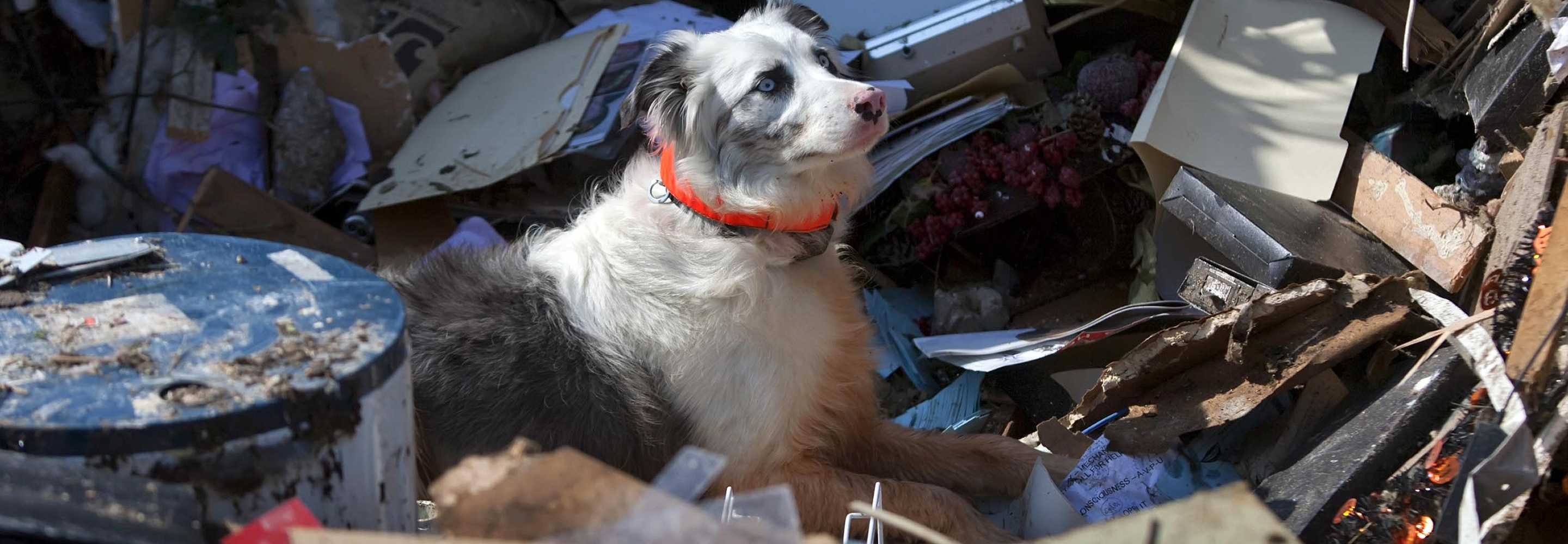 This is a slide